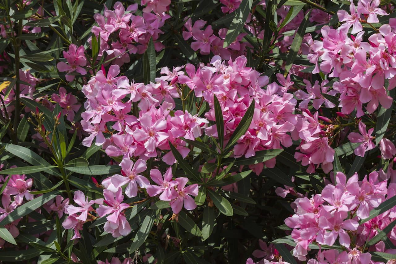 Piante sempreverdi scorci rigogliosi tutto l 39 anno for Giardini fioriti tutto l anno