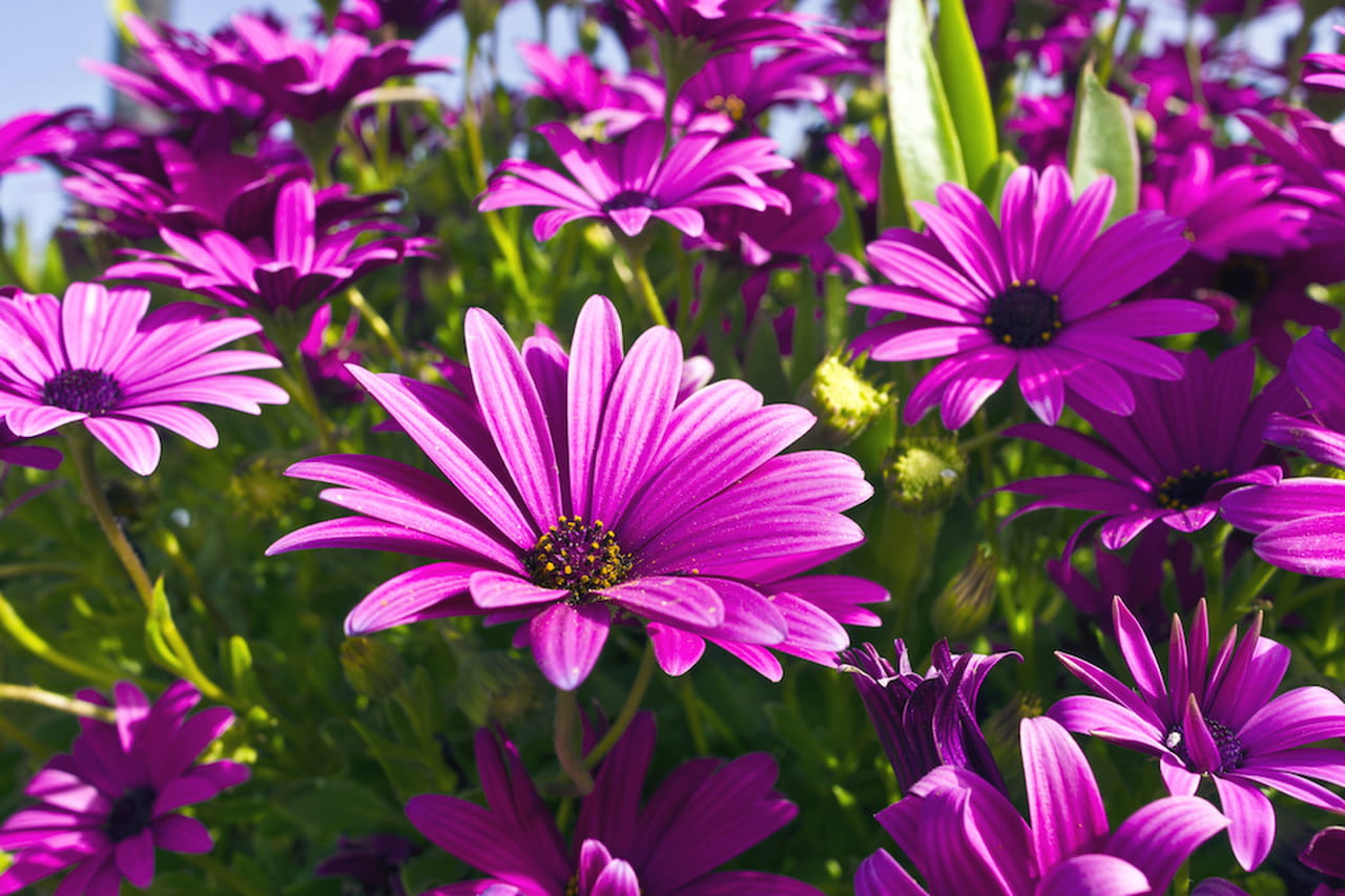 Fiori da giardino ordinate macchie di colore for Fiori da esterno