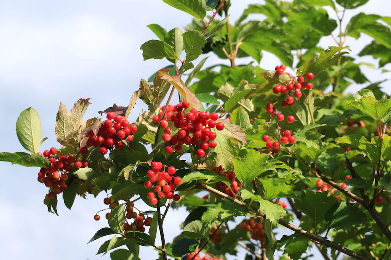 Piante da giardino sempreverdi ornamentali e fiorite for Fiori sempreverdi da giardino