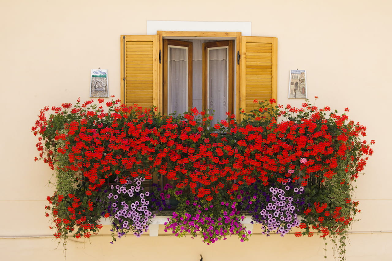 Fiori colorati soluzioni per balconi estivi - Fiori da giardino estivi ...
