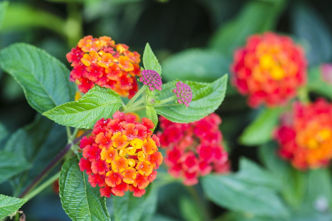 Fiori da giardino ordinate macchie di colore