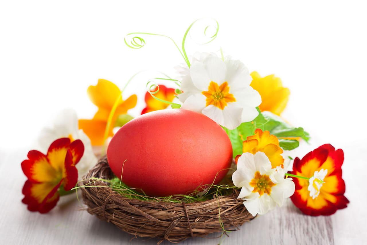 Addobbi di pasqua decorazioni per la casa con le uova - Decorazioni per uova di pasqua ...