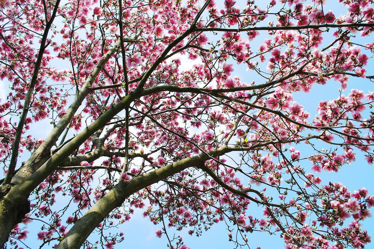 Piante da giardino sempreverdi ornamentali e fiorite - Piante x giardino ...