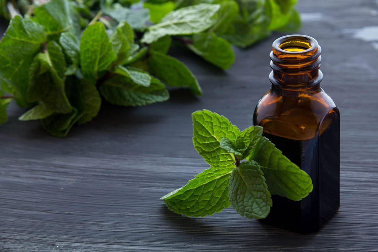 5 إستخدامات علاجية للنعناع غير متوقعة 2661685