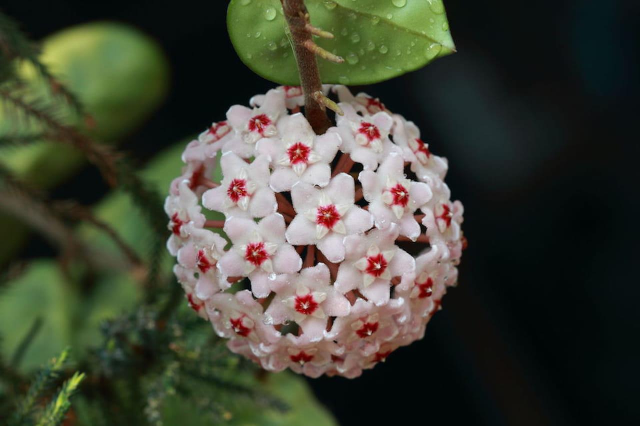 Piante da appartamento quali dove come for Pianta ornamentale con fiori a grappolo profumatissimi