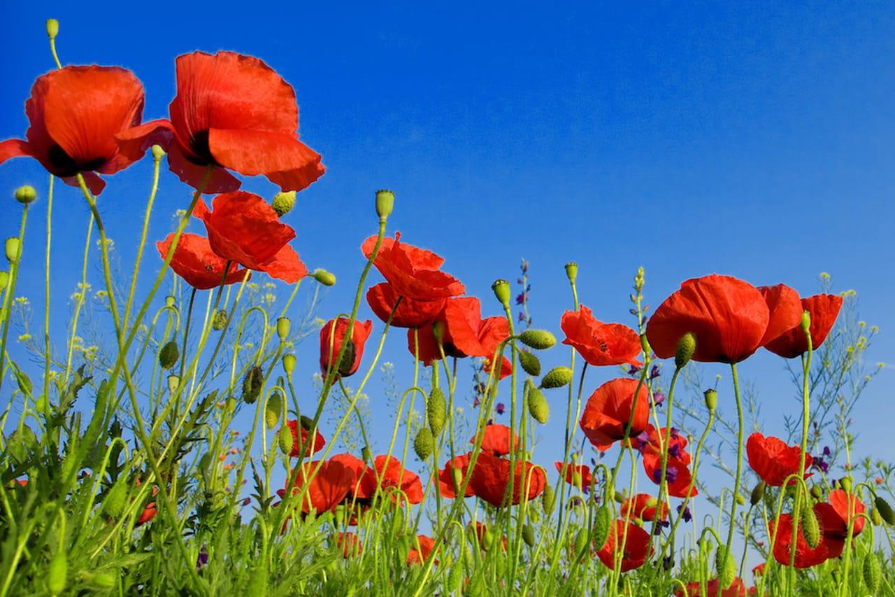 Fiori da giardino ordinate macchie di colore for Aiuole fiorite immagini