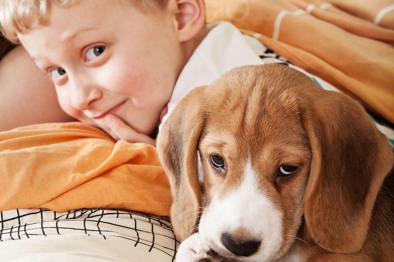 Cani adatti ai bambini: le razze da appartamento