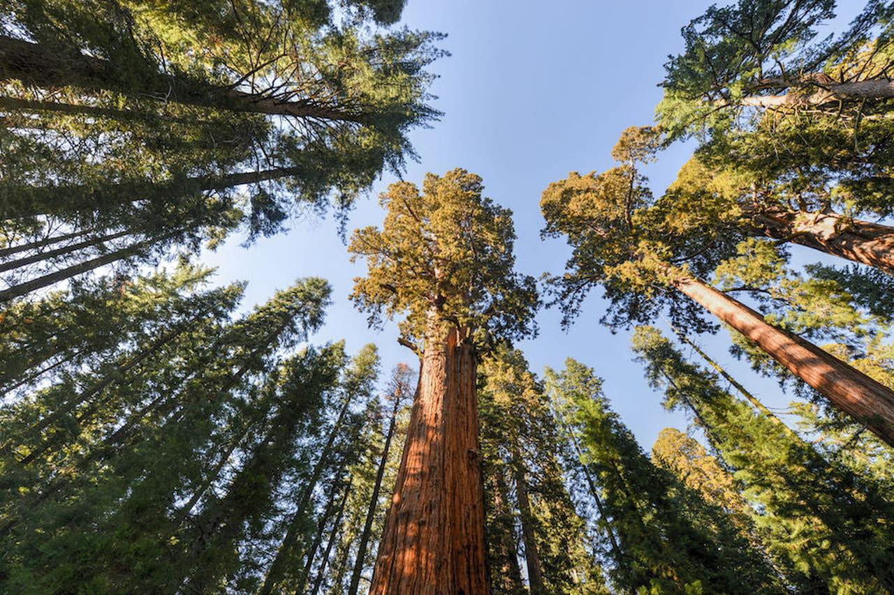 alberi sempreverdi quali sono