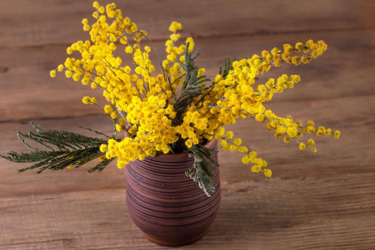 Lavoretti per la festa della donna consigli per bambini for Mimosa in vaso