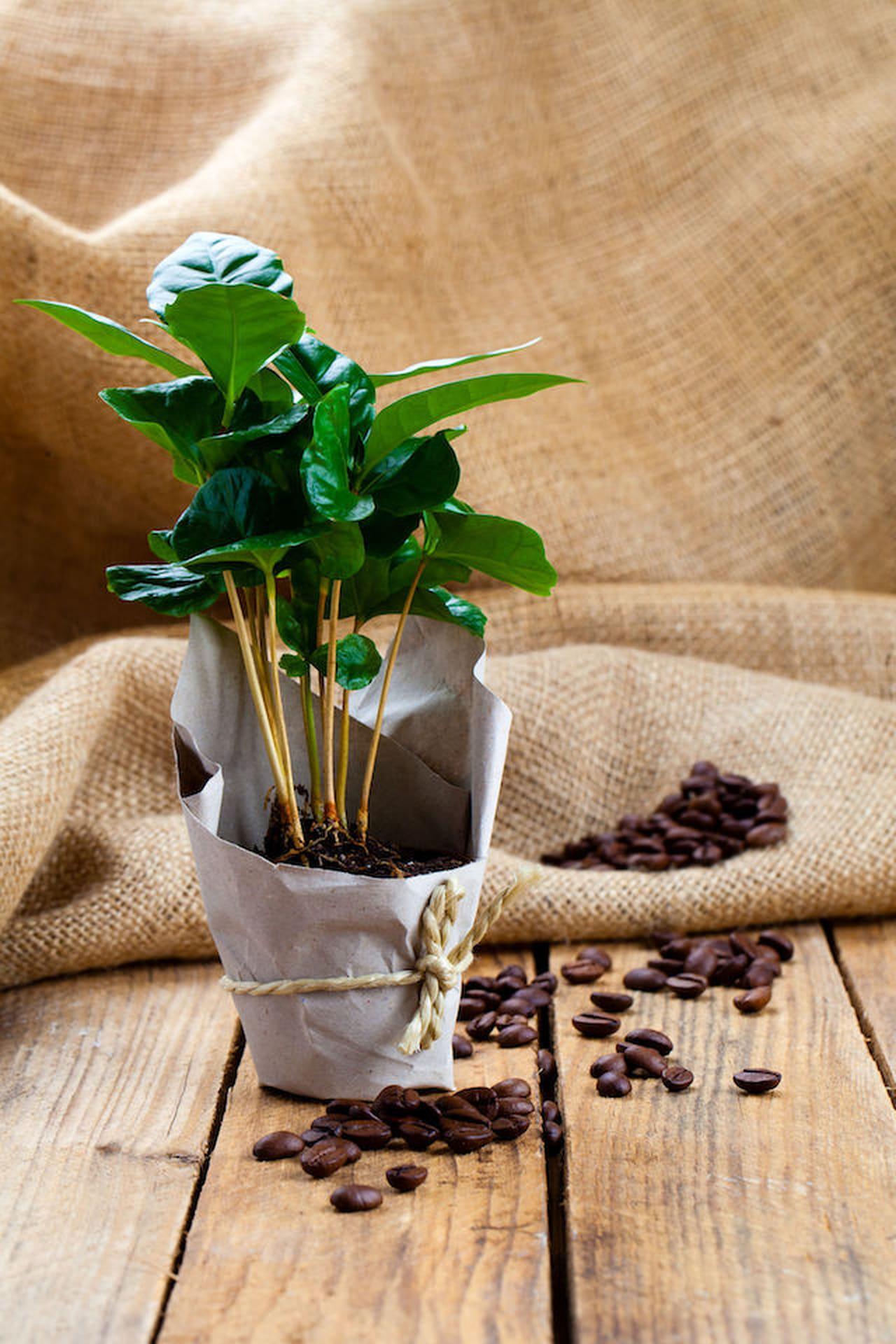 Piantine da interno with piantine da interno piantine da for Ficus benjamin perde foglie