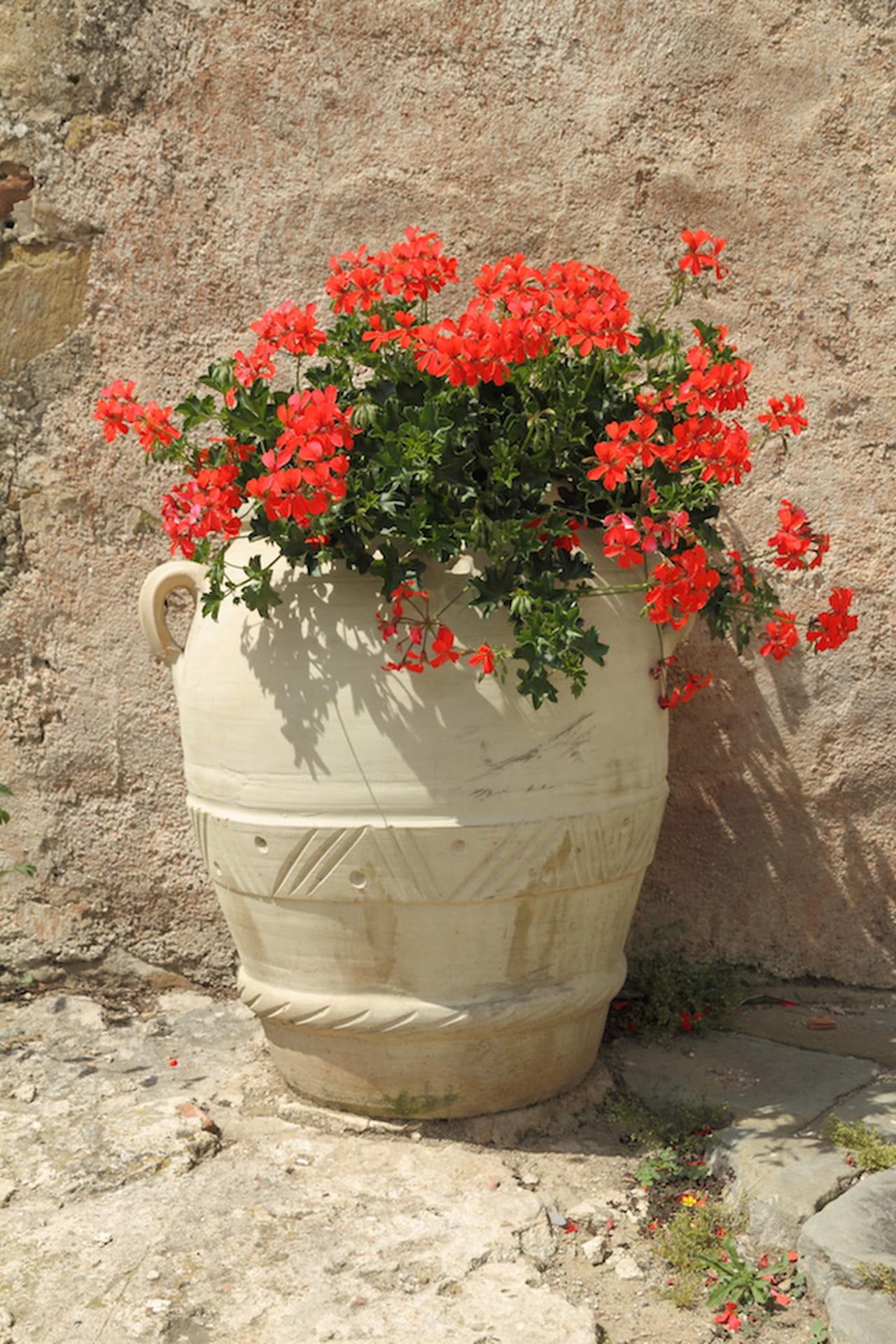 Piante da balcone belle utili e profumate for Case ricoperte di edera