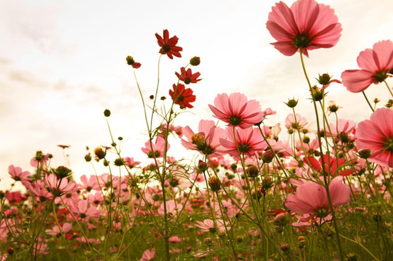 كيف يمكننا الحفاظ على الأزهار لمدة اطول...!!