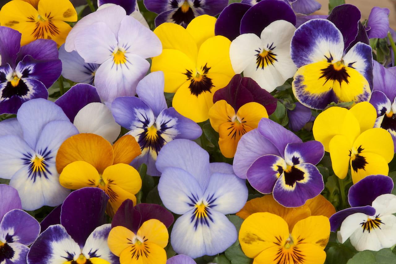 Giardino D Inverno Significato : Fiori primaverili a tutto colore e profumo