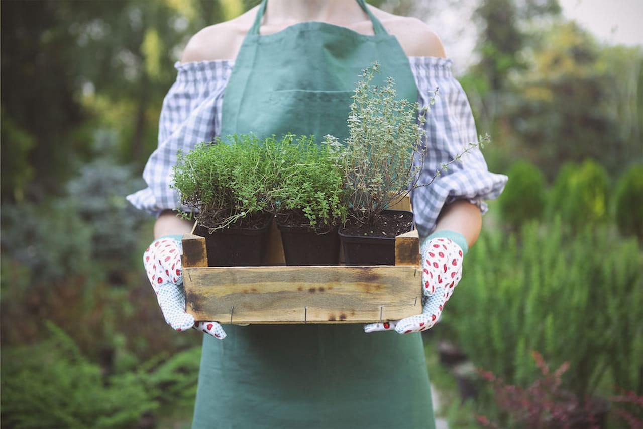 Giardino fai da te no problem for Spruzzatori giardino