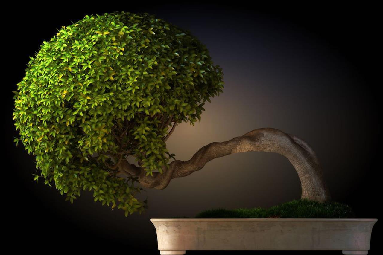 Piante da appartamento quali dove come for Dove comprare bonsai