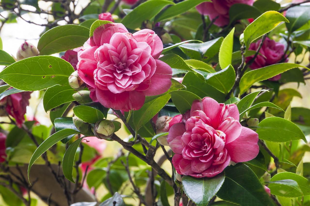 Fiori primaverili a tutto colore e profumo for Viola cornuta inverno