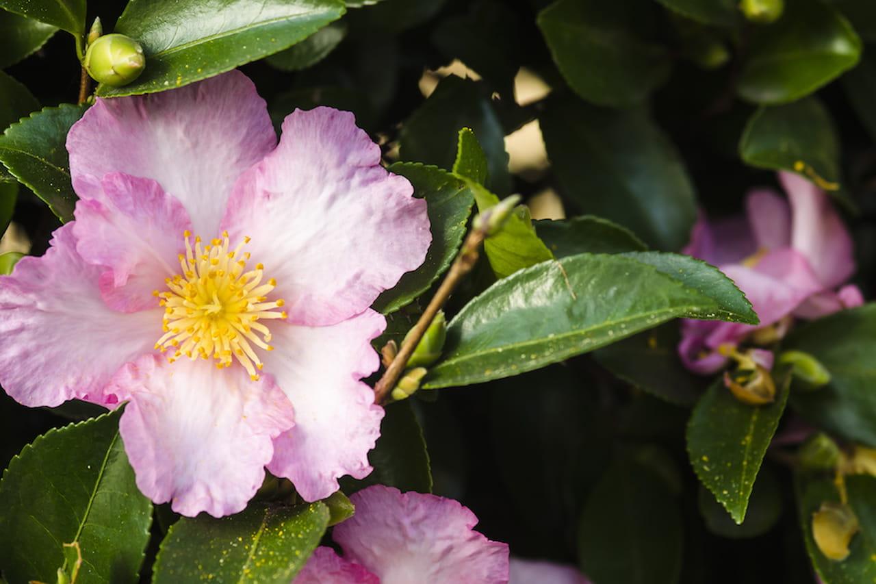Fiori da giardino ordinate macchie di colore - Grossi fiori da giardino ...