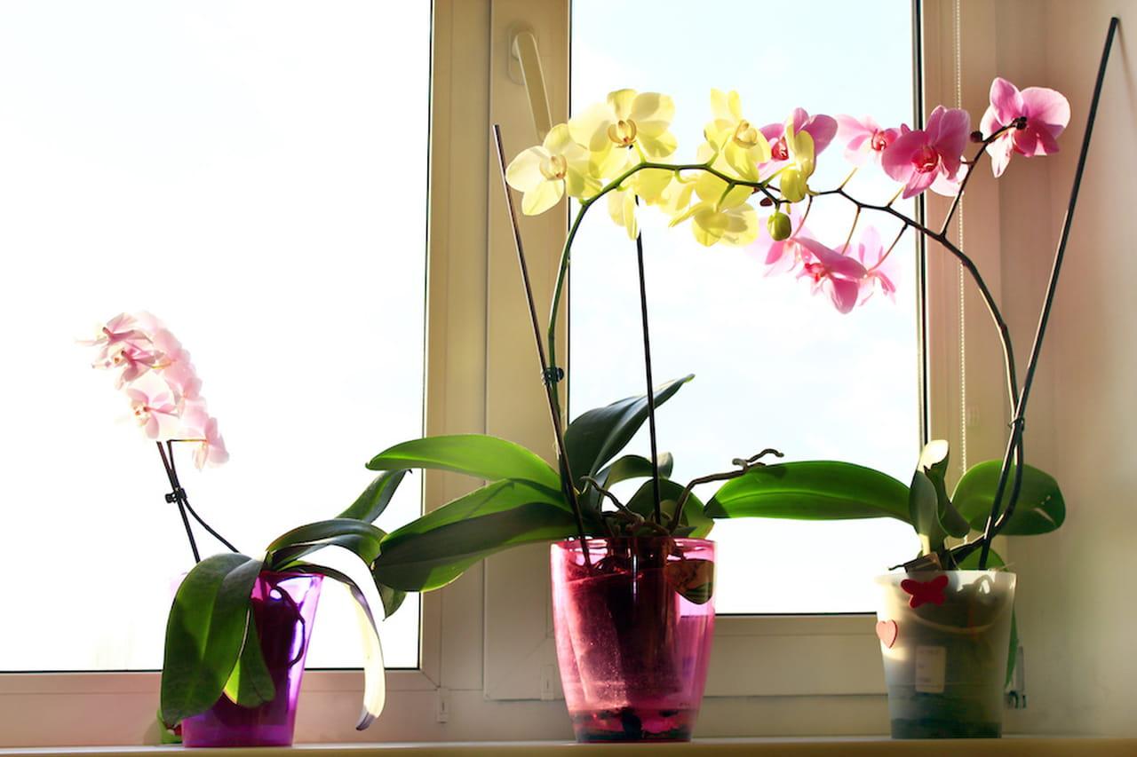 Piante da appartamento quali dove come - Orchidee da appartamento ...