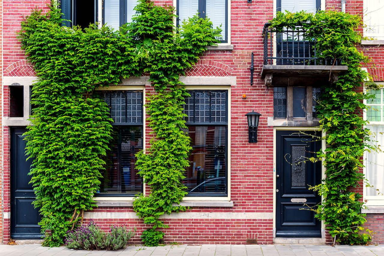 Piante rampicanti facciate pergolati e appartamenti fioriti for Piante rampicanti
