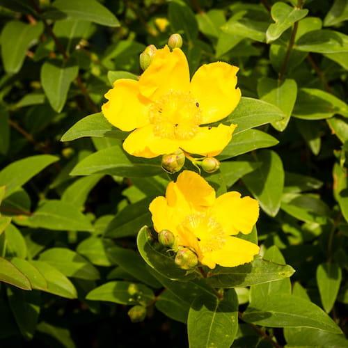 Piante sempreverdi scorci rigogliosi tutto l 39 anno for Le piante sempreverdi