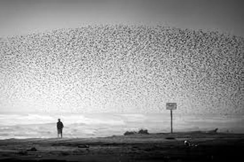 Nicolas Bouvier : la photographie et ses mystères