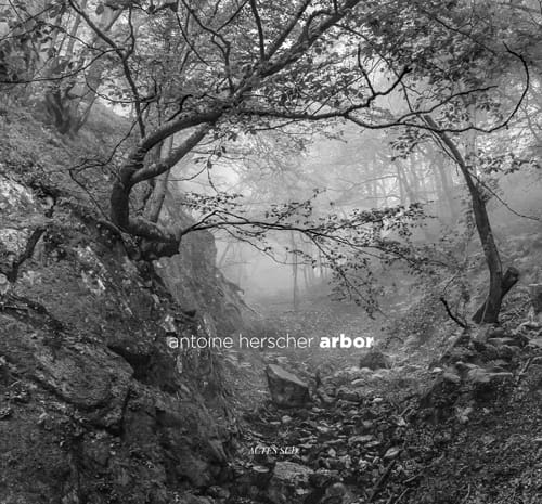 Arbor : Antoine Herscher en poète des arbres