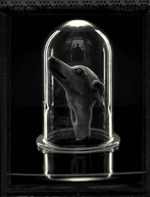 Gilles Berquet : sous verre
