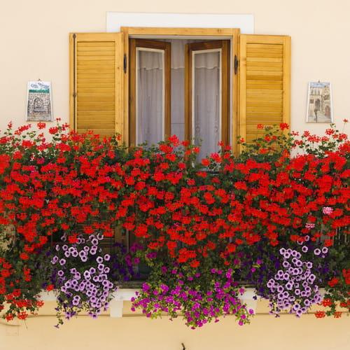 fiori colorati soluzioni per balconi estivi