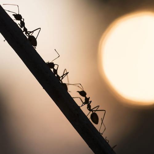 Formiche in casa come eliminarle con metodi naturali - Come debellare le formiche in casa ...